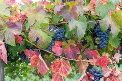 Rode Groen en Blauw Royalty-vrije Stock Foto's