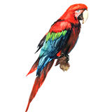 Rode groene ara, aronskelkenpapegaai, op geïsoleerde tak, waterverfillustratie Royalty-vrije Stock Afbeeldingen