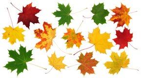 Rode, groene en gele esdoornbladeren Royalty-vrije Stock Afbeeldingen