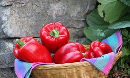 Rode groene paprika's in een rieten mand Royalty-vrije Stock Afbeeldingen