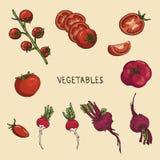 Rode groenten Royalty-vrije Stock Foto's