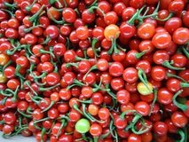 Rode groenten Brazilië stock foto's