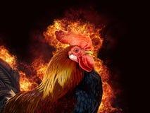 Rode haan in vlam royalty-vrije stock afbeelding