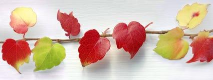 Rode harten Stock Fotografie