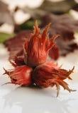Rode hazelnoten Royalty-vrije Stock Afbeeldingen