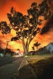 Rode hemel over Australische gomboom Stock Afbeelding