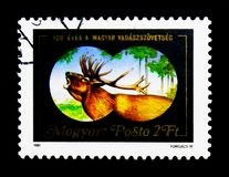 Rode Herten (Cervus-elaphus), 100ste Verjaardag van Hongaarse Jager Stock Fotografie