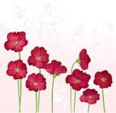 Rode het groeien wilde bloemen Royalty-vrije Illustratie