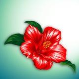 Rode hibiscusbloem stock illustratie