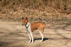 Rode hond op bosweg Royalty-vrije Stock Foto