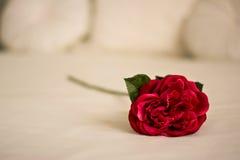 Rode huwelijksbloem op slecht Royalty-vrije Stock Afbeelding