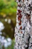 Rode insecten royalty-vrije stock foto