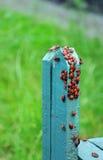 Rode insecten Stock Afbeeldingen
