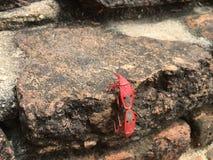Rode insecten Stock Afbeelding