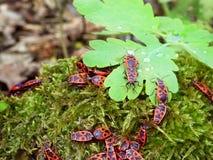 Rode insecten Royalty-vrije Stock Afbeelding
