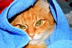 Rode kat Royalty-vrije Stock Afbeeldingen