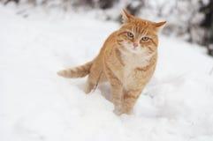 Rode kat Stock Foto's