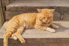 Rode kat Stock Foto