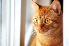 Rode Kat bij het venster Stock Foto's