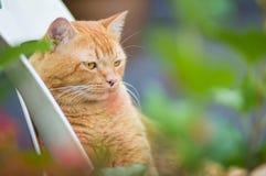 Rode kat in de de zomertuin Stock Foto's