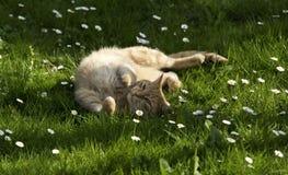 Rode kat in de lenteweide Royalty-vrije Stock Foto's
