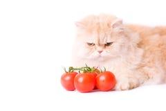 Rode kat deze tomaat Stock Fotografie