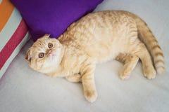 Rode kat die op een bus liggen Royalty-vrije Stock Foto