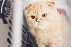 Rode kat die sceptisch kijken Stock Foto's