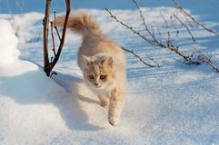 Rode kat die zacht door de sneeuw lopen Stock Foto's