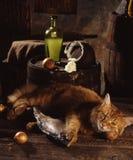 Rode kat, droge vissen en zure room stock foto