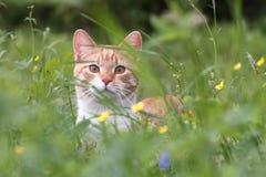 Rode kat in een groen gras Stock Fotografie