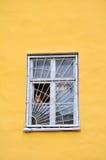 Rode kat in het venster Stock Foto's