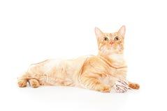 Rode kat met een bal van garen Stock Fotografie