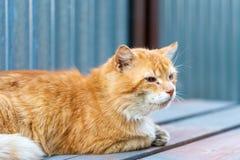 Rode kat met een beschadigd oog die op de raad liggen Sluit omhoog royalty-vrije stock foto