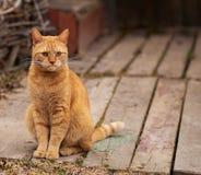 Rode kat met een ontstemde blik stock afbeelding
