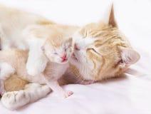 Rode kat met katjes stock foto's