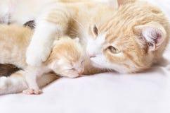 Rode kat met katjes stock afbeelding