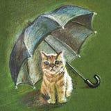 Rode kat onder de paraplu Royalty-vrije Stock Fotografie