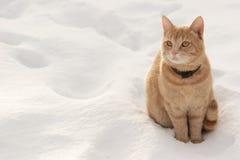Rode kat op de sneeuw Stock Fotografie