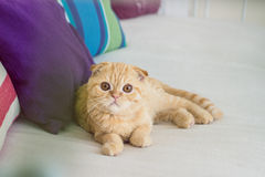 Rode kat op een bank Stock Afbeeldingen