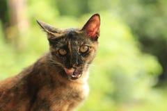 Rode kat op een groene achtergrond stock foto