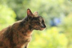 Rode kat op een groene achtergrond stock afbeelding