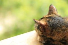 Rode kat op een groene achtergrond royalty-vrije stock foto
