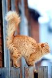 Rode kat op een omheining Stock Afbeeldingen