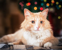 Rode kat op feestachtergrond royalty-vrije stock afbeeldingen