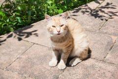 Rode kat op steenweg Stock Fotografie
