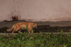 Rode kat openlucht royalty-vrije stock foto's