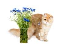 Rode katje en korenbloemkleuren in een vaas stock afbeeldingen
