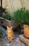 Rode kattenzitting dichtbij een pot van bloemen royalty-vrije stock fotografie