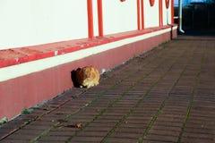 Rode kattenzitting dichtbij het gebouw stock afbeeldingen